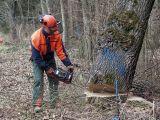 Qualitaetswaldpflege_05