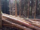 Qualitaetswaldpflege_08