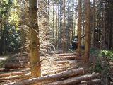 Qualitaetswaldpflege_10