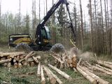 Qualitaetswaldpflege_15