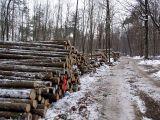Qualitaetswaldpflege_16