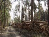 Qualitaetswaldpflege_17