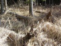 Waldverwuestung_09